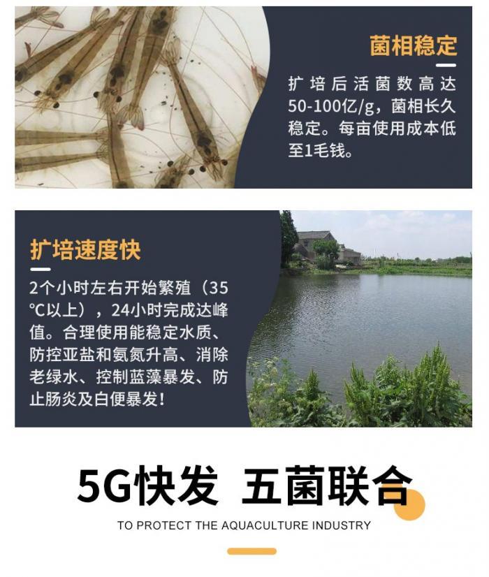 5G快发_详情页4.jpg